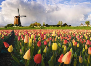 Welcome_to_Holland
